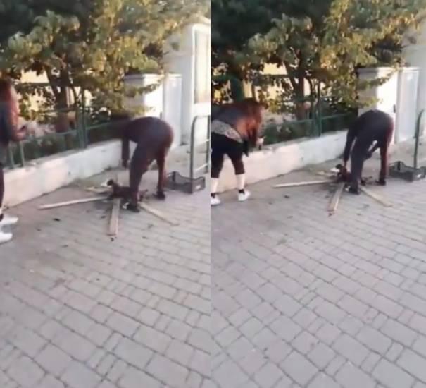 Schifoso! immigrato uccide un gatto e lo cucina per strada, il Video