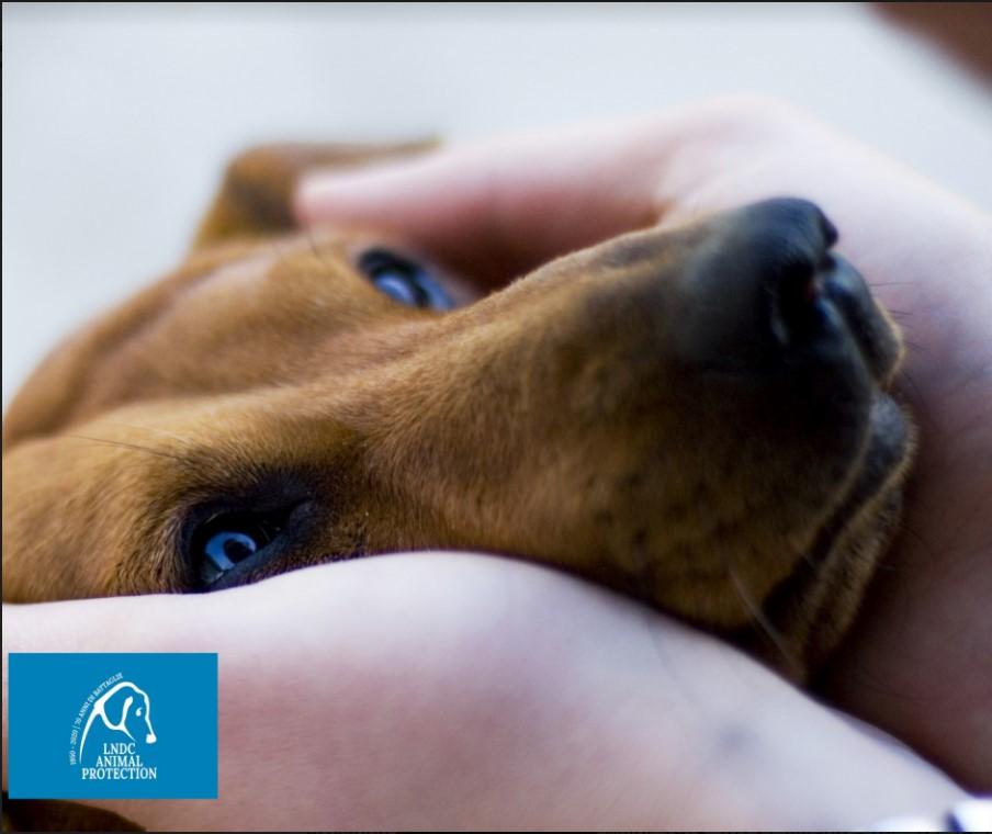 Animali: maltrattamenti e diritti - da LNDC le soluzioni che le Istituzioni dovrebbero adottare