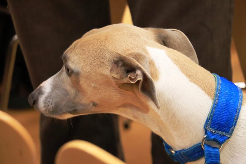 Coronavirus e i nostri animali domestici: le risposte del Servizio veterinario