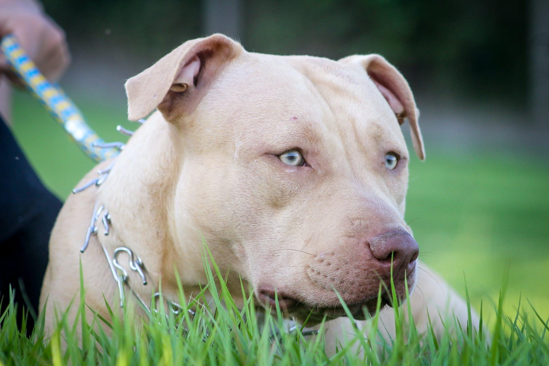 Il cane Rocky ucciso da un poliziotto : pretendiamo giustizia!
