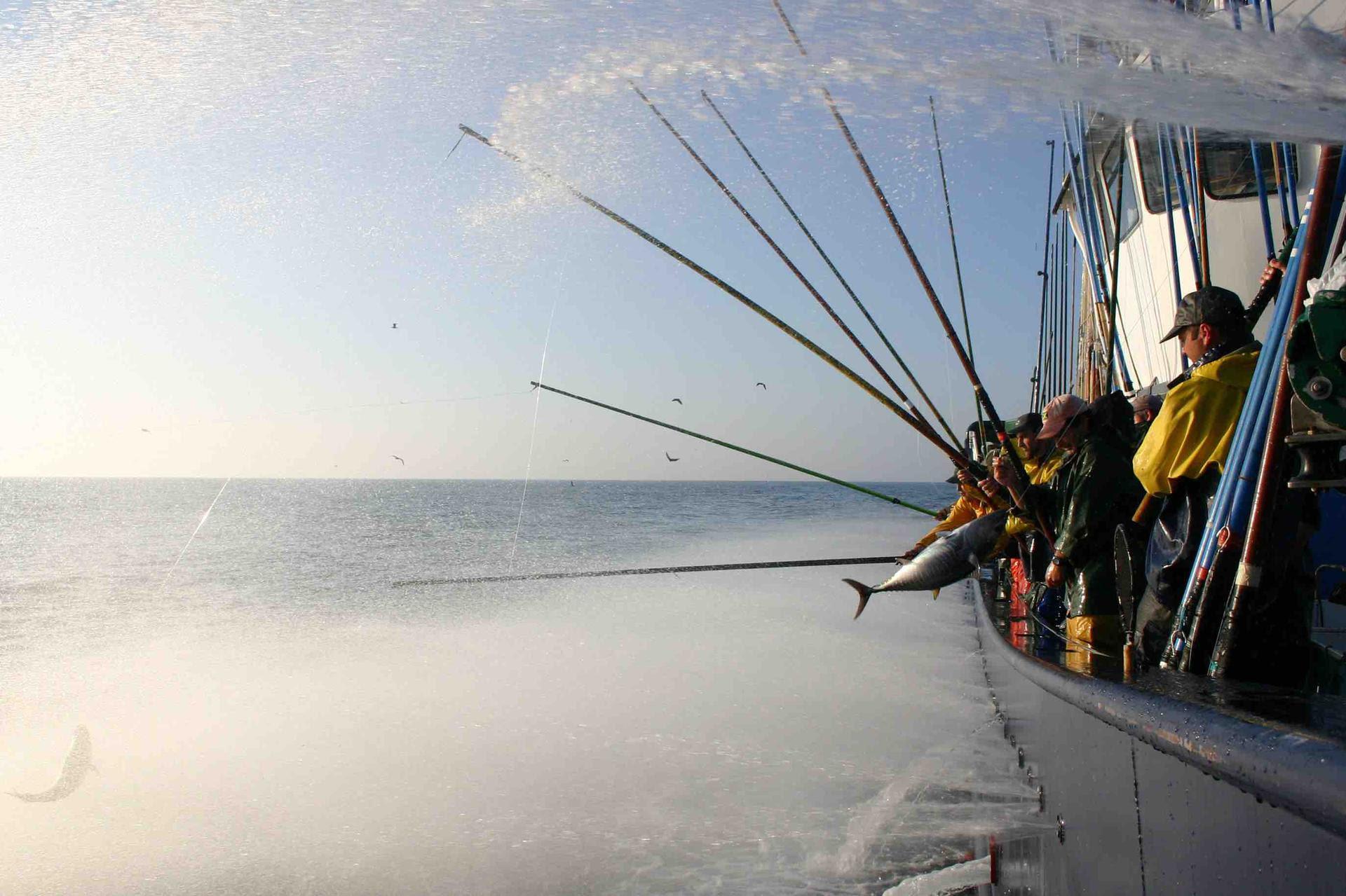 Ricerca su consumo prodotti ittici di Marine Stewardship Council con Globescan