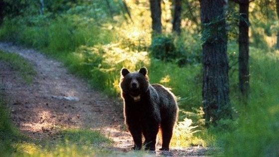 Incontrano un orso sul Monte Peller: feriti padre e figlio