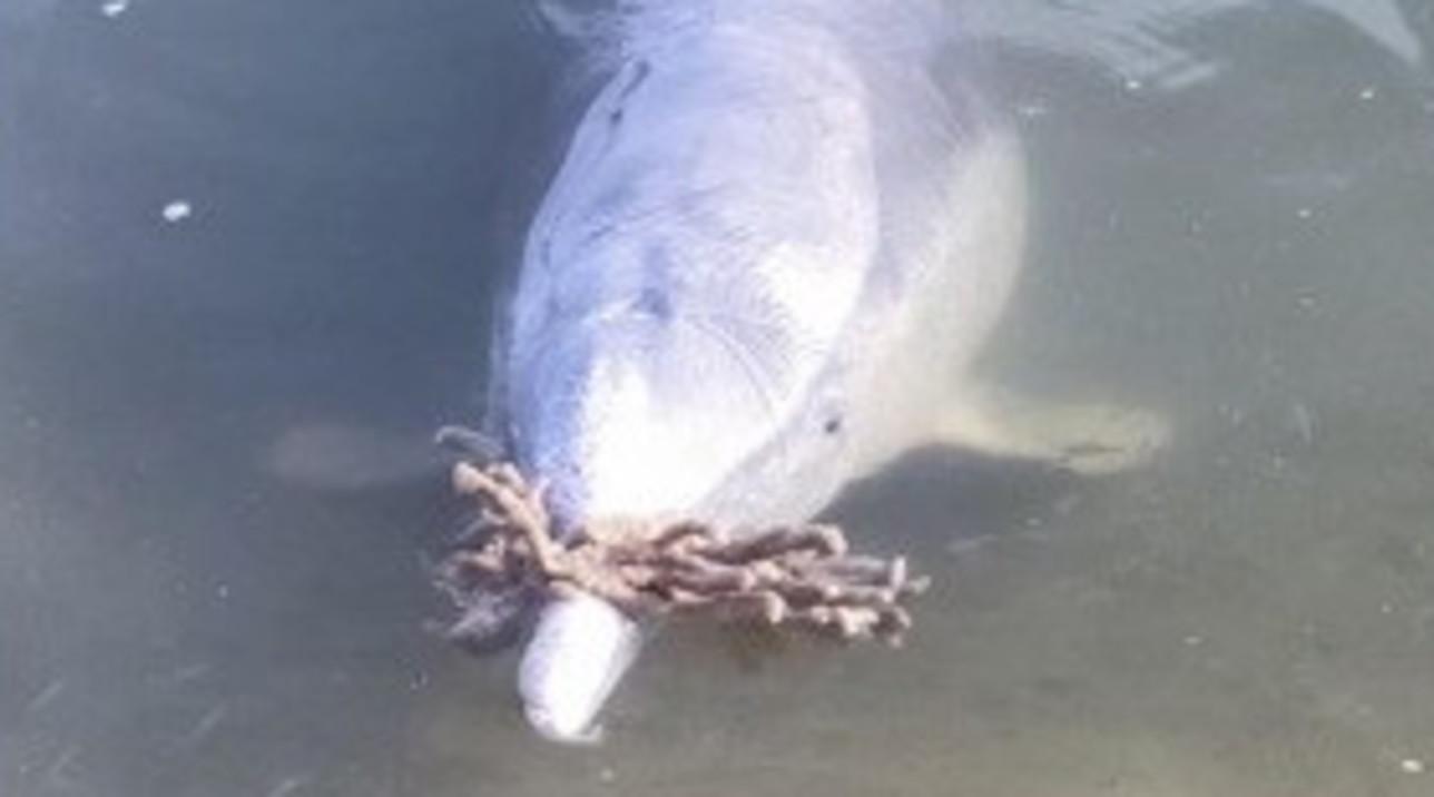 I delfini rimasti soli durante il lockdown portano doni sulle spiagge