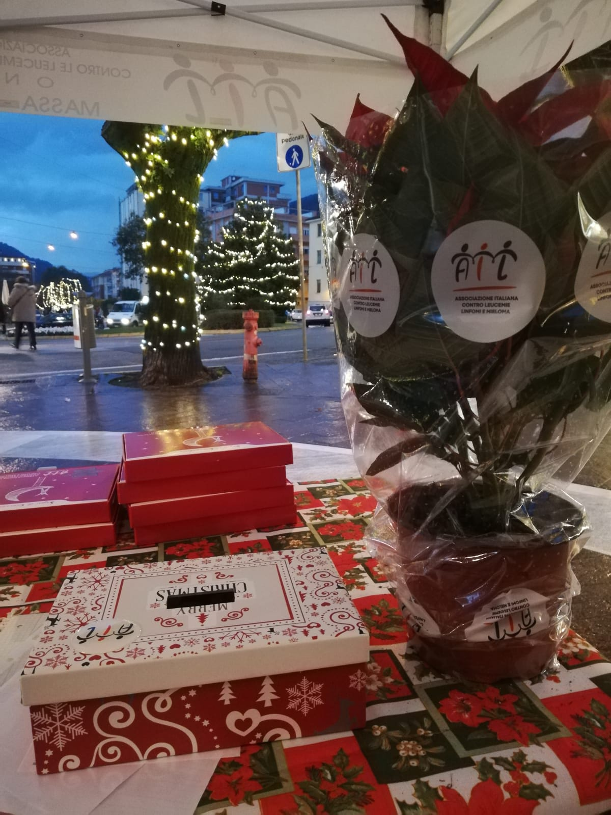 Un successo la vendita delle Stelle di Natale A.I.L. di Massa –Carrara.Il punto del presidente apuano  Ezio Szorenyi