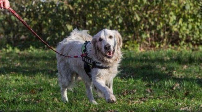 Asti, per traslocare trascura i suoi cani: ora uno è morto!