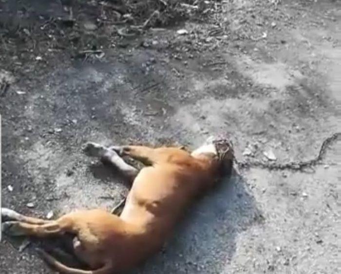 Il cane legato e trascinato da un'auto : in Campania viene ucciso un animale al giorno