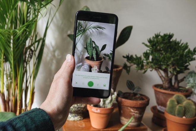 Le migliori app per giardinaggio