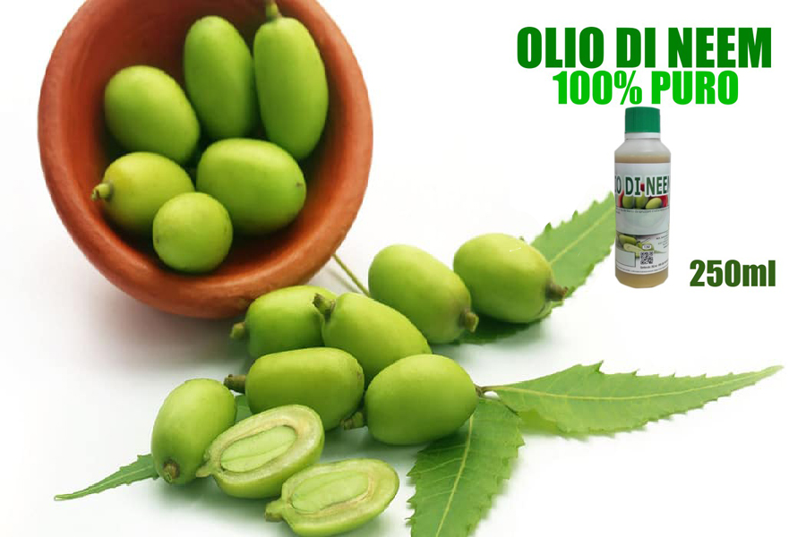 Olio di Neem: come si usa e a cosa serve