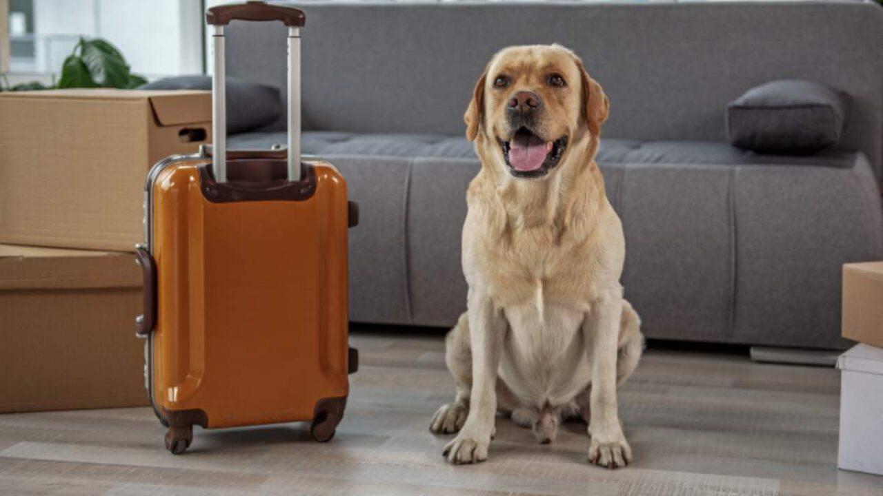 SOS stress da rientro per il cane: i consigli dell