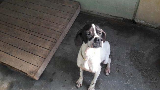 Cane chiuso da giorni in una cantina di Torino salvato dai vigili