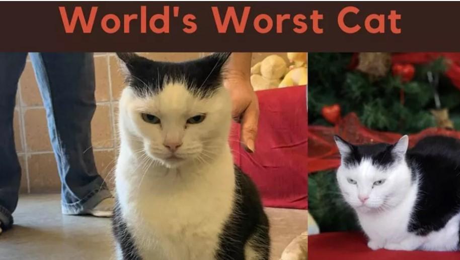 Ecco Perdita, il gatto peggiore del mondo è pronto all'adozione